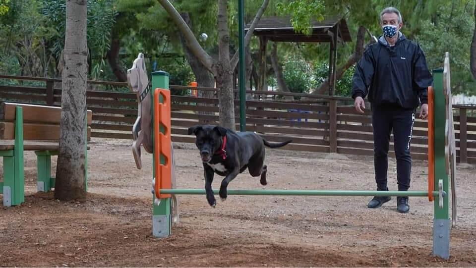 Πρότυπο πάρκο σκύλων Γιάννης Κωνσταντάτος